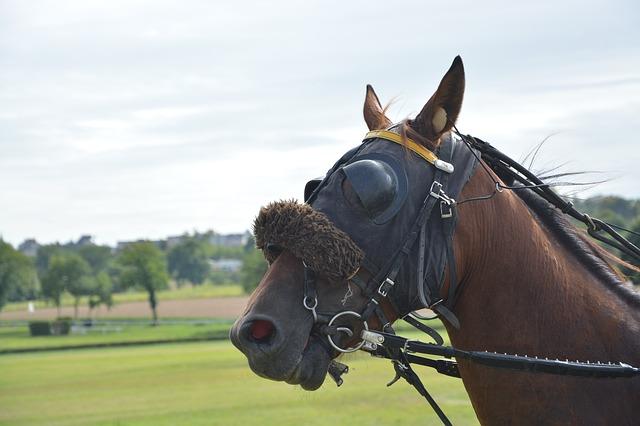 koňské otěže